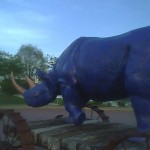 Rhinocerous in Chattanooga