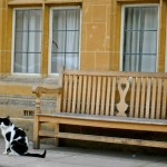 Oxford Mansfield College Cat